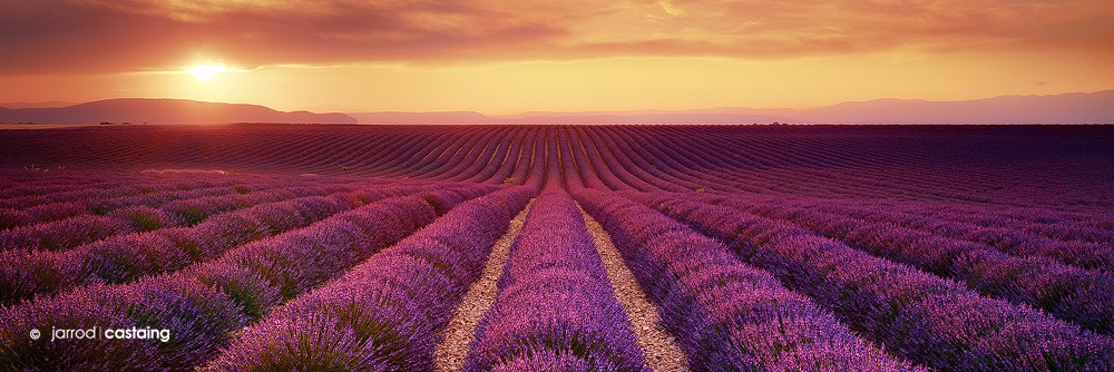 Limited Edition Print - Lavender Fields