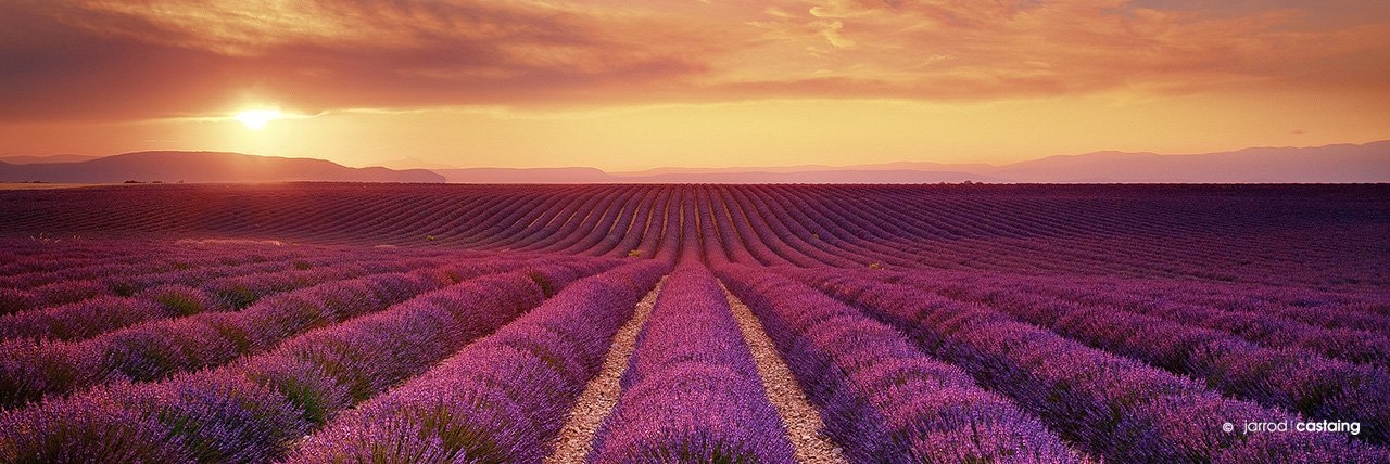 Fine Art Landscape Photographic Print of Lavender Fields